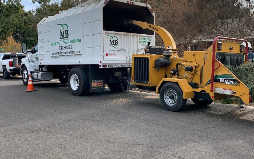 Maldonado Brothers Tree Service Provides Expert Tree Service in Clovis, CA